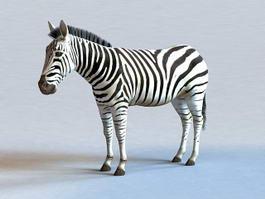 Zebra Animal 3d model preview