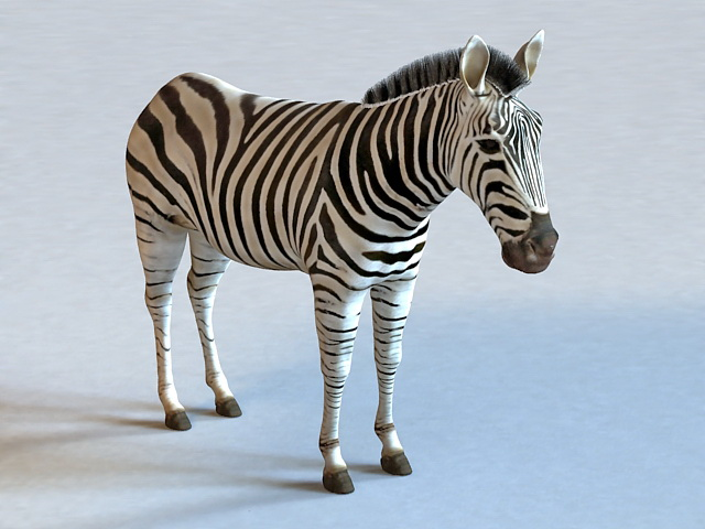 Zebra Animal Model Studio Max Object Free Download Modeling Cadnav