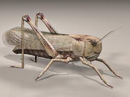 Giant Grasshopper 3d preview