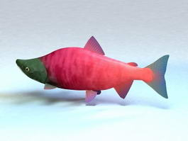 Alaska Sockeye Salmon 3d model preview