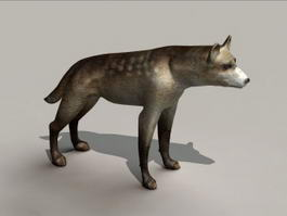 Spotted Hyena 3d preview