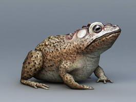 Toad Animal 3d preview