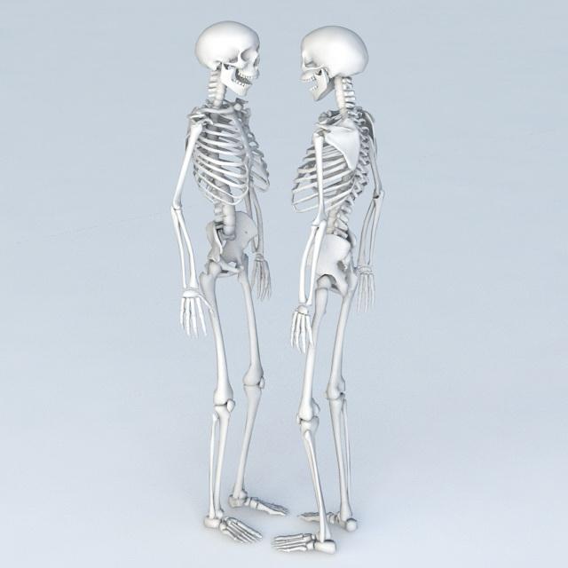 Full Body Skeleton Human 3d rendering