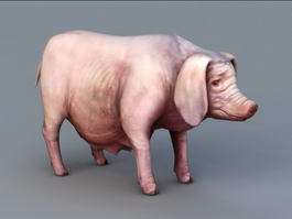 Female Pig Sow 3d model preview