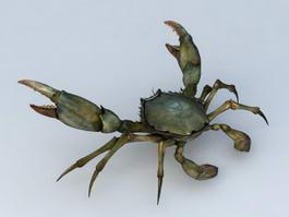 European Green Crab 3d model preview