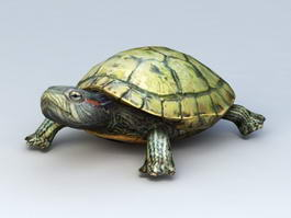 Water Turtle 3d preview