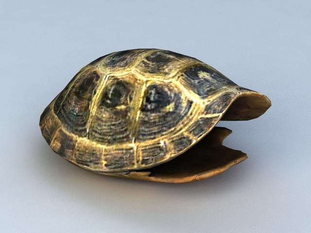 Tortoise Shell 3d rendering