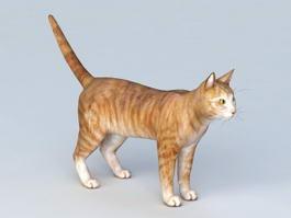 Household Pet Cat 3d model preview