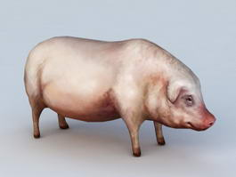 Domestic Pig 3d preview