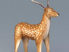 White Spotted Deer 3d model preview