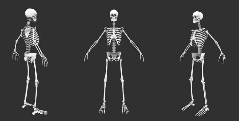 Human Body Skeleton 3d rendering