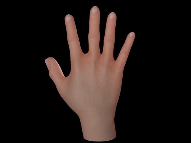 Human Hand 3d rendering