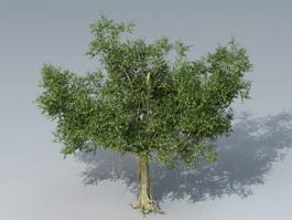Banyan Tree 3d model preview