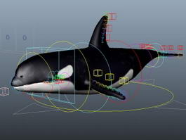 Killer Whale Rig 3d preview