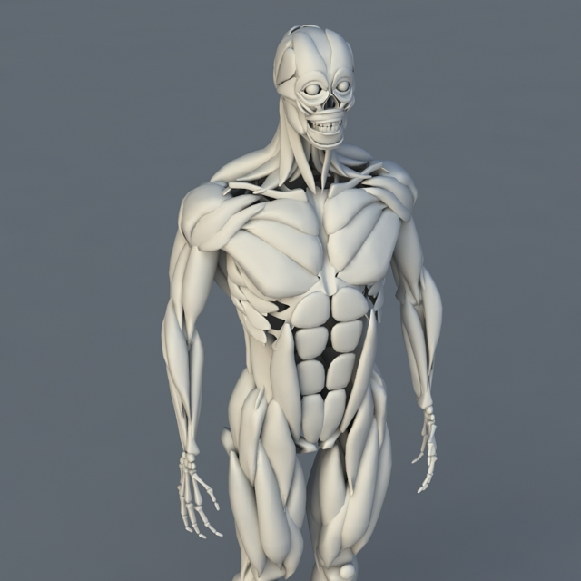Human Body Bones and Muscles 3d rendering