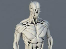 Human Body Bones and Muscles 3d preview