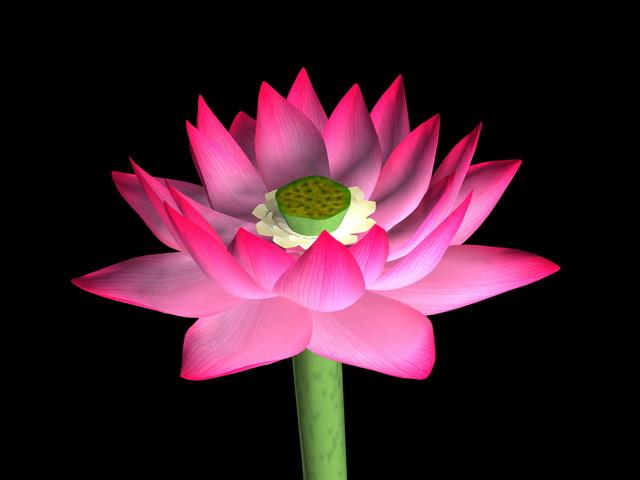 Beautiful Lotus Flower 3d rendering