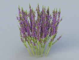 Heather Flower 3d model preview