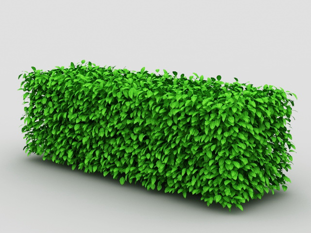 Box Hedge Topiary 3d rendering