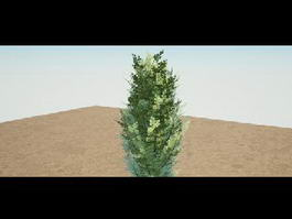 Evergreen Tree 3d model preview
