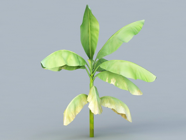 Banana Leaf Plant Tree 3d rendering
