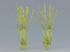 Rice Plant 3d preview