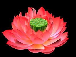 Lotus Bloom 3d preview