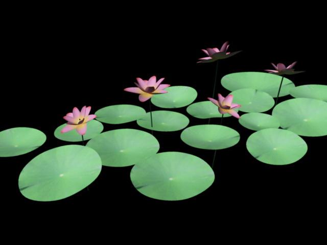 Water Lilies Flowers 3d rendering