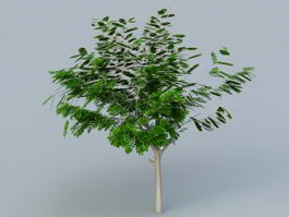 Small Acacia Tree 3d model preview
