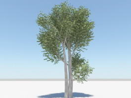 Mango Tree 3d model preview