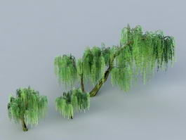 Weeping Willow Trees 3d preview
