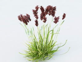 Marsh Reed Plant 3d preview