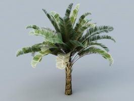 Raphia Palm Trees 3d model preview