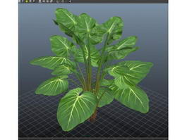 Philodendron Plant 3d preview