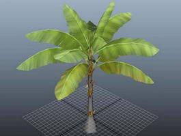 Three Banana Tree 3d model preview