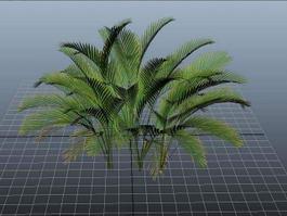 Cat Palm Plant 3d preview