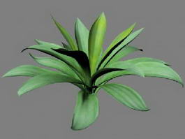 Furcraea Plant 3d preview