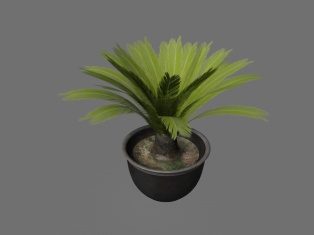 Potted Sago Palm Plants 3d rendering