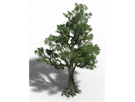 Old Birch Tree 3d model preview