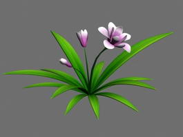 Chinese Cymbidium Orchids 3d model preview
