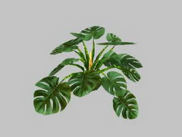 Monstera Plant 3d preview
