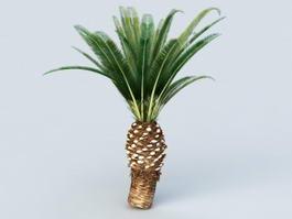 Queen Sago Palm 3d preview