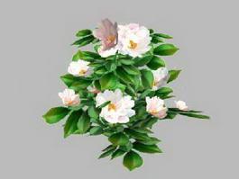 White Camellia Flower 3d model preview