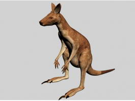 Kangaroo Animal 3d preview
