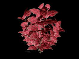 Red Leaf Plants 3d preview
