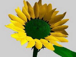 Common Sunflower 3d model preview