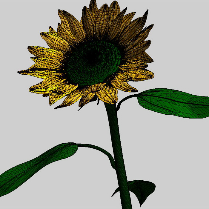 Common Sunflower 3d rendering