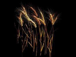 Wheat Stalk 3d preview