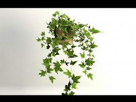 Ivy Plants 3d preview