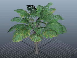 Swiss Cheese Plant Monstera Deliciosa 3d preview
